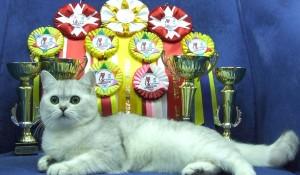 Почти ежемесячно в Минске проходят выставки кошек.