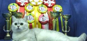 Выставки кошек в Минске