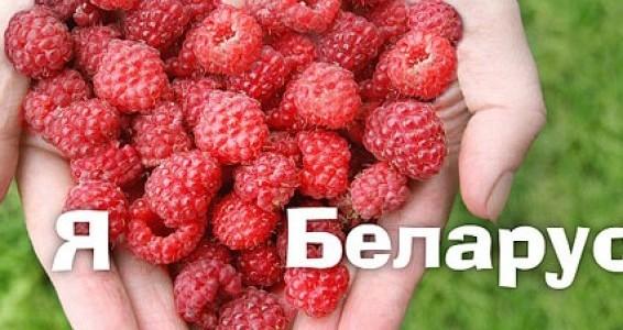Республику Беларусь из-за ее огромных лесных угодий и многочисленных рек с озерами называют не только «голубоглазой» страной, но и «легкими Европы».